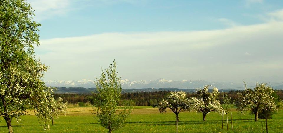 Erholsamer Urlaub auf dem Land, eingebettet in eine Streuobstlandschaft mit schönster Bergsicht.